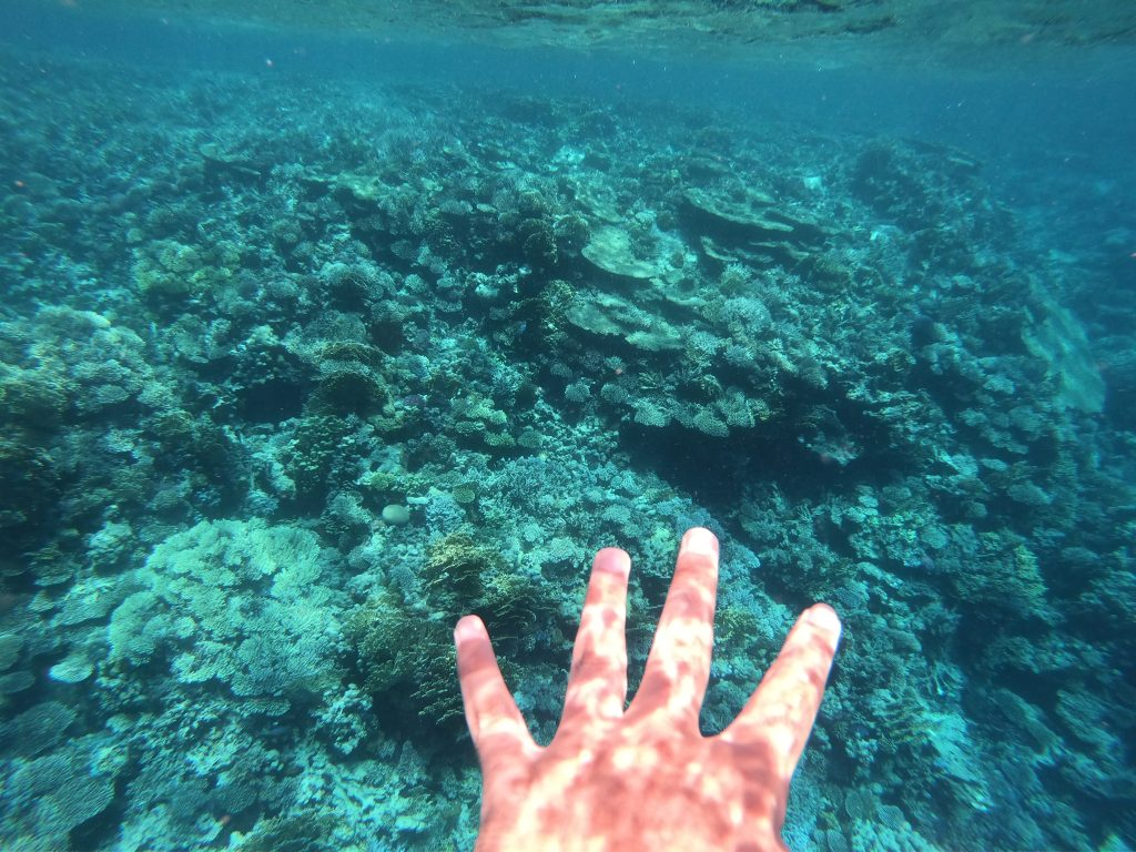 Snorkeling in Red Sea! 1