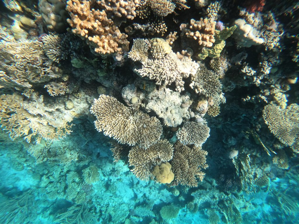 Snorkeling in Red Sea! 5