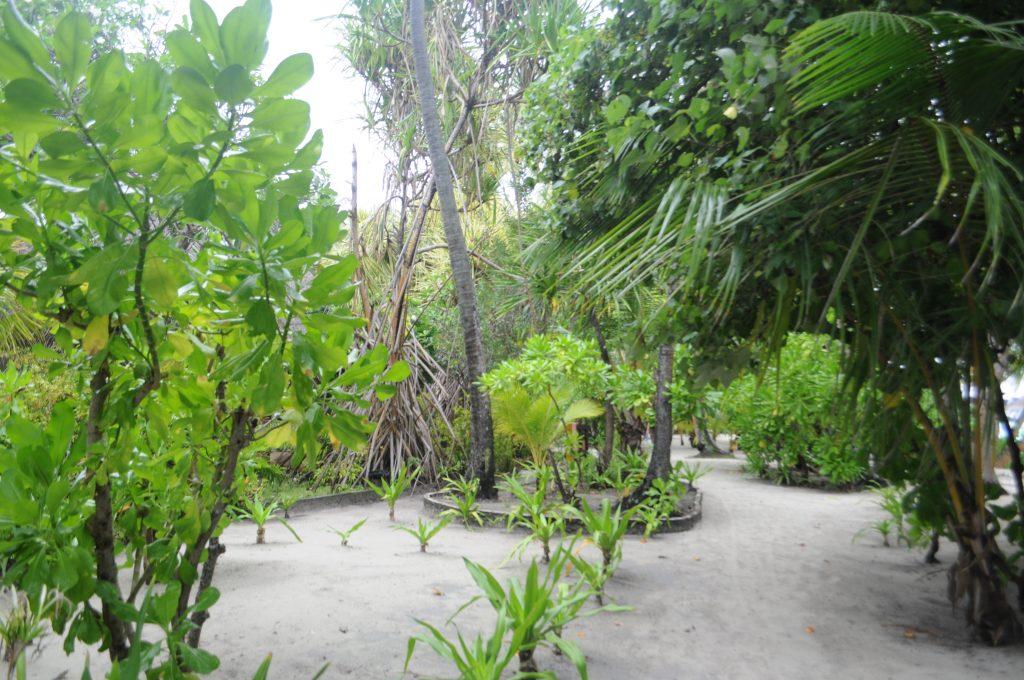 O insula de vis- Kurmathi, Maldives! 14