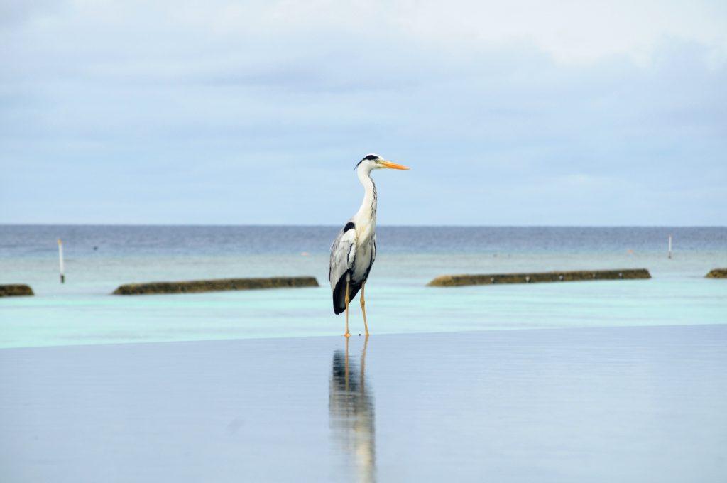 O insula de vis- Kurmathi, Maldives! 10