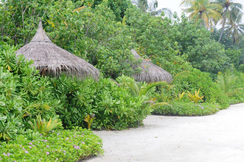 O insula de vis- Kurmathi, Maldives! 6