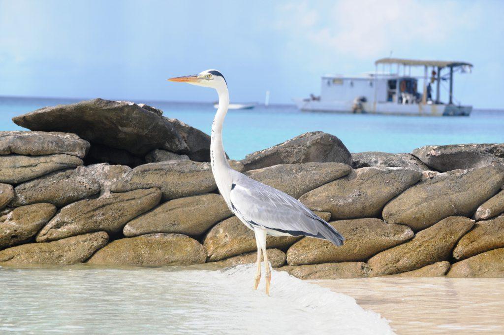O insula de vis- Kurmathi, Maldives! 15