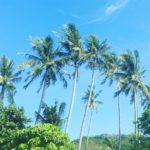 Încă o poveste din Thailanda! Monkey Beach, Maya Bay, Phi Phi Island. 8