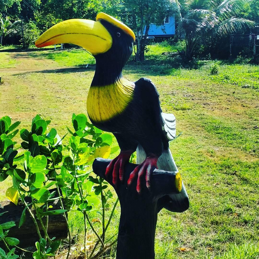 Pasărea Rinocer; în căutarea ei pe Koh Tapao Noi-Insula Farul Lanternă.