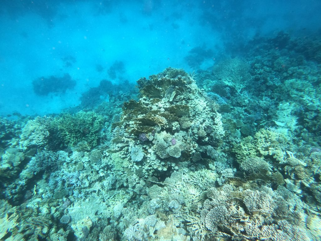 Snorkeling in Red Sea! 3